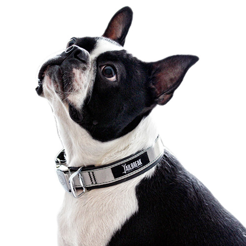 Reflective silver dog collar
