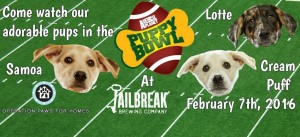 Puppy Bowl and Superbowl 50!
